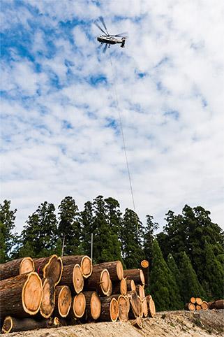伐採した木材を運搬